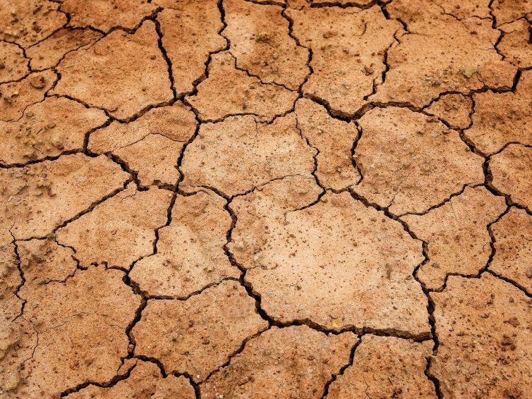 Dürre – das neue Normal?